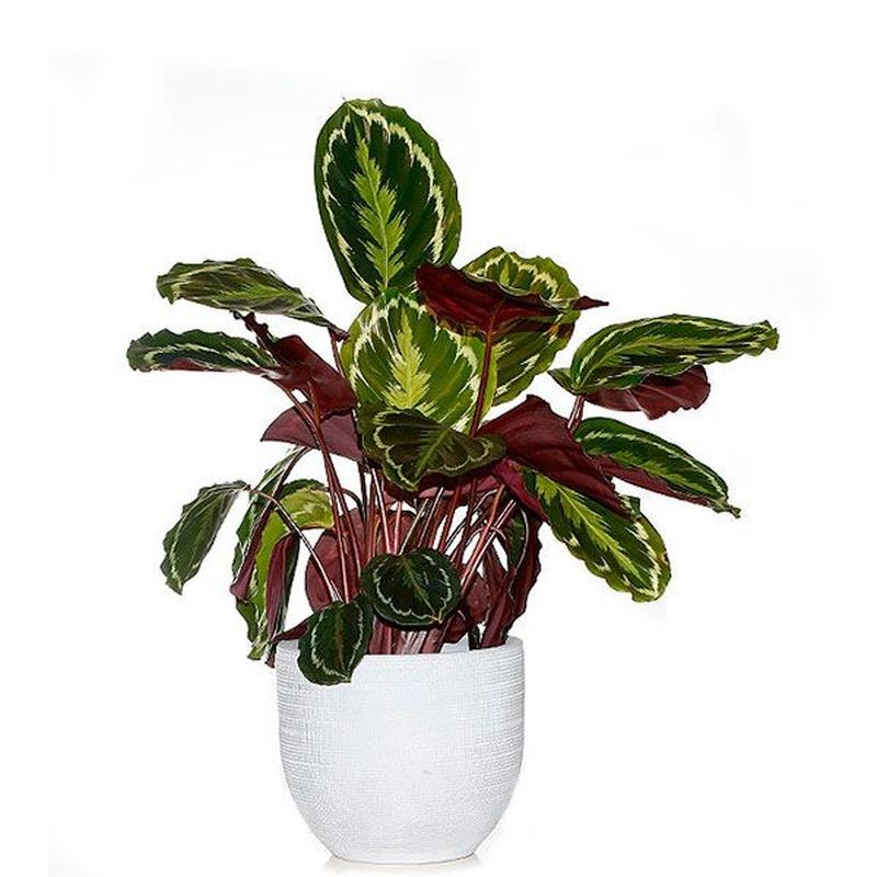Plantas de interior: Productos de FLORISTERÍA CASA BASUSTA