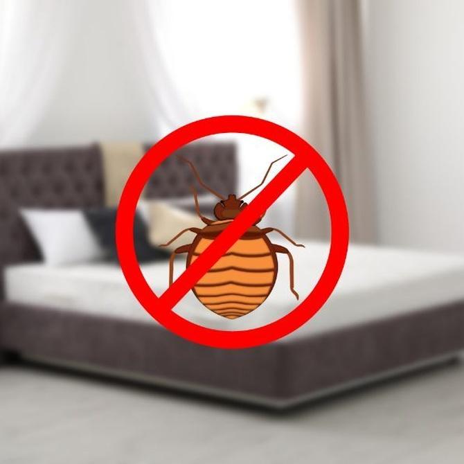 Desinfectar, limpiar e higienizar el colchón, fundamental para la salud