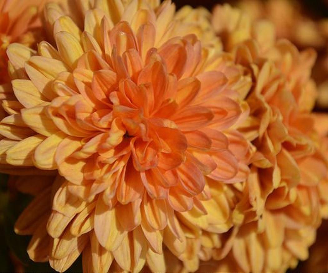 Tipos de flores en las coronas funerarias