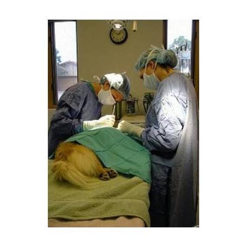 Cirugía: Servicios de Clínica Veterinaria Virgen de Icíar