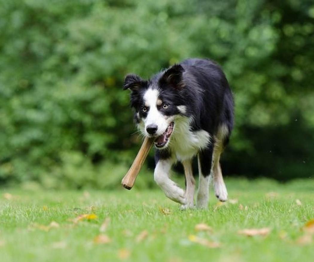 Quítale el hueso a tu perro