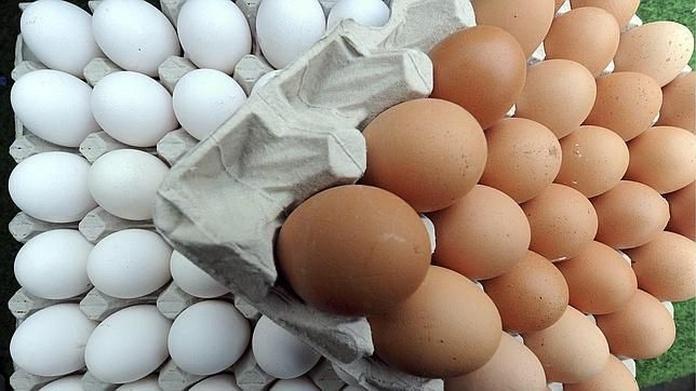 Granja de huevos: Productos de Avícola Sánchez