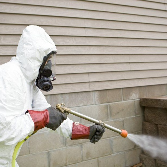 Como combatir una plaga de cochinillas en el jardín