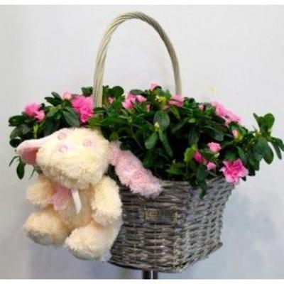 Especial mamás: Flores Freesia