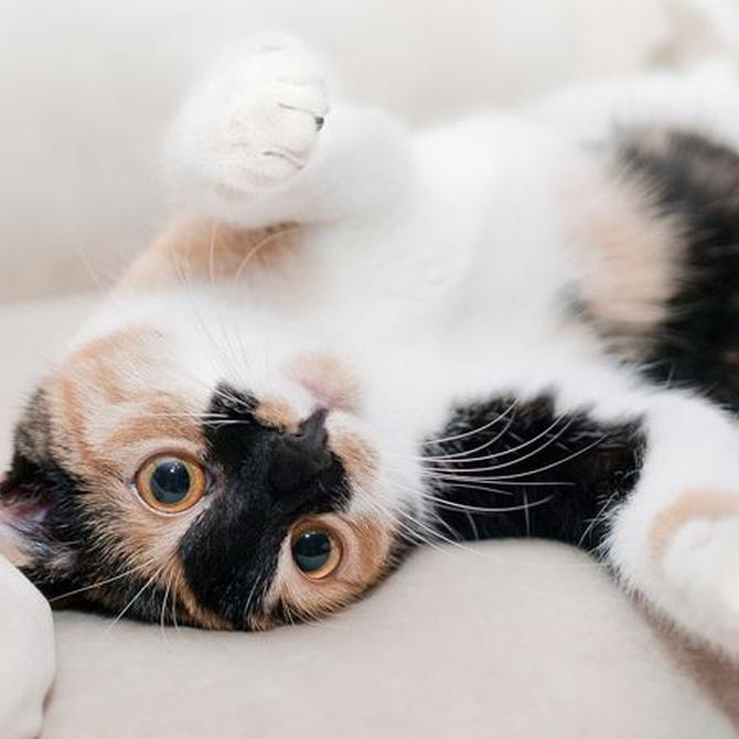 Cuidar a tu gato jugando con él