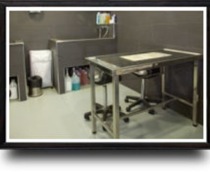 Galería de Veterinarios en A Coruña | Arca Hospital Veterinario