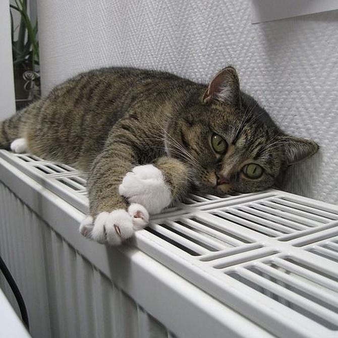 Las ventajas de instalar una bomba de calor aerotérmica en casa