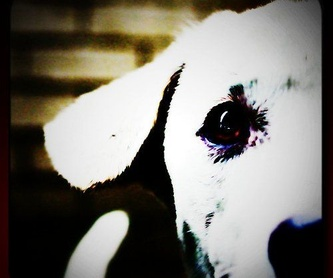 Peluquería canina y felina: Servicios de Centre Veterinari Panda