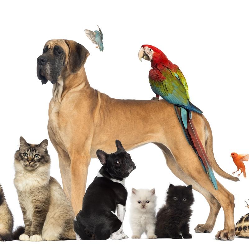 Venta de animales: Servicios de Shira Mascotas
