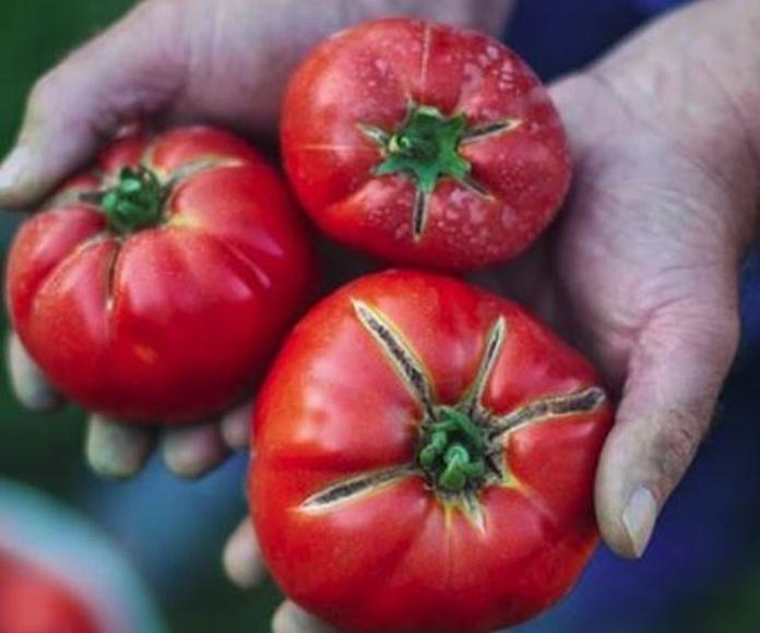 Cómo elegir tomates que sepan de verdad a tomates