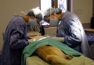 Cirugía y hospitalización