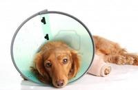 Servicios veterinarios: Servicios de Clínica Veterinaria Dr. Nieto