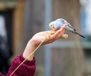 Qué cuidados necesita un pájaro papillero