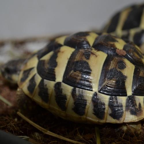 Alimento vivo para reptiles en el Baix Llobregat: Reptil Parc