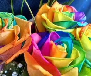 Rosas Arcoíris a domicilio