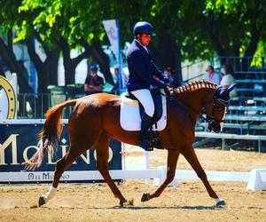 Escuela de equitación