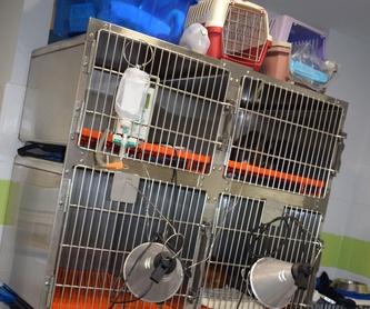 Peluquería canina y felina: Servicios veterinarios de Clínica Veterinaria Parque de los Estados