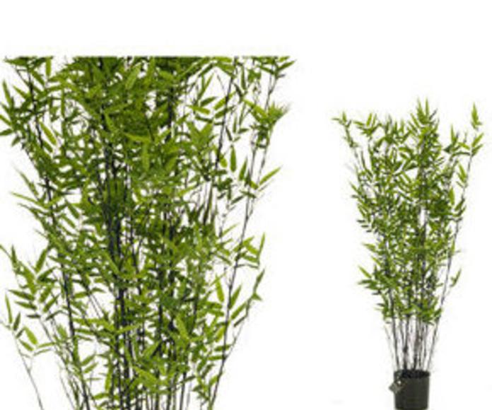 Árbol bambú oriental black 105cm