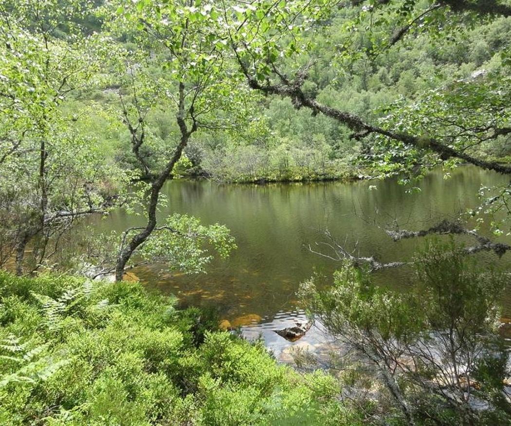 Descubre la fauna y flora asturianas