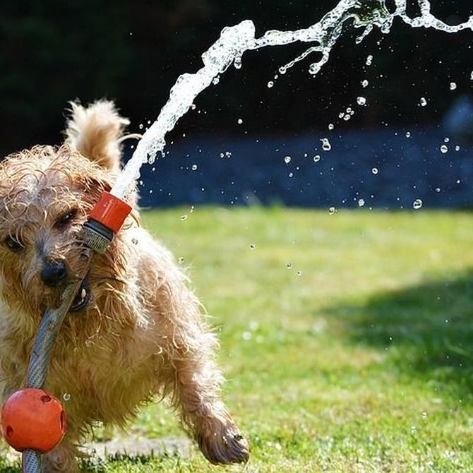 ¿Es bueno rapar a tu perro?