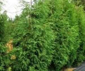 Poda de árboles y arbustos Piélagos ( Cantabría )
