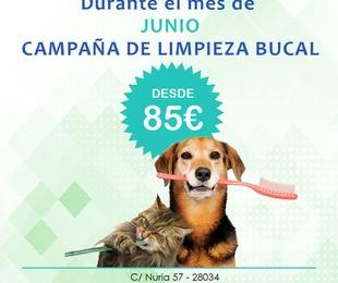LIMPIEZA BUCAL POR 85€ EN JUNIO