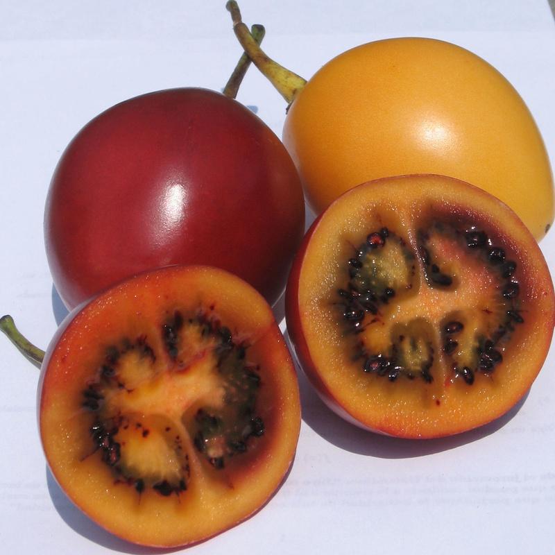 Tamarillo: Productos de Mundifruit