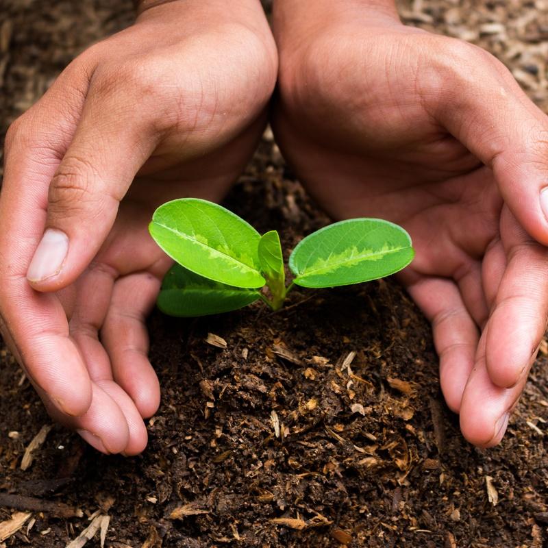 Tratamientos fitosanitarios: Servicios de Plantas Benalla