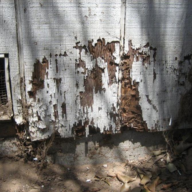 Indicios de termitas