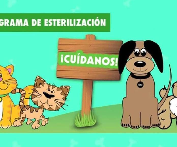 CAMPAÑA DE CONTROL DE NATALIDAD DE PERROS Y GATOS CLÍNICA VETERINARIA ANUBIS