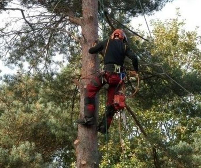 Poda en altura y tala de arboles: Servicios  de Jardinería Garrotxa