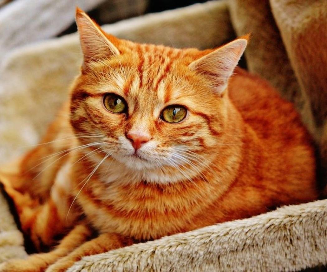 El peligro de la leucemia felina