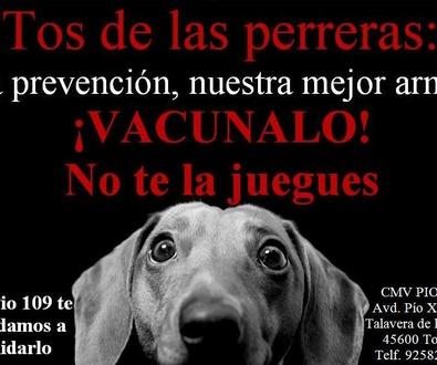 Campaña de vacunación frente a la tos de las perreras