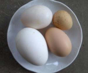 Venta de huevos de oca