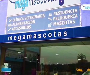 Clínica veterinaria en Molina de Segura | Megamascotas