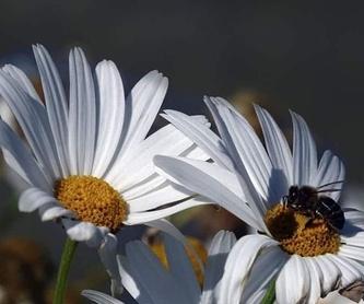 Flores de interior y exterior
