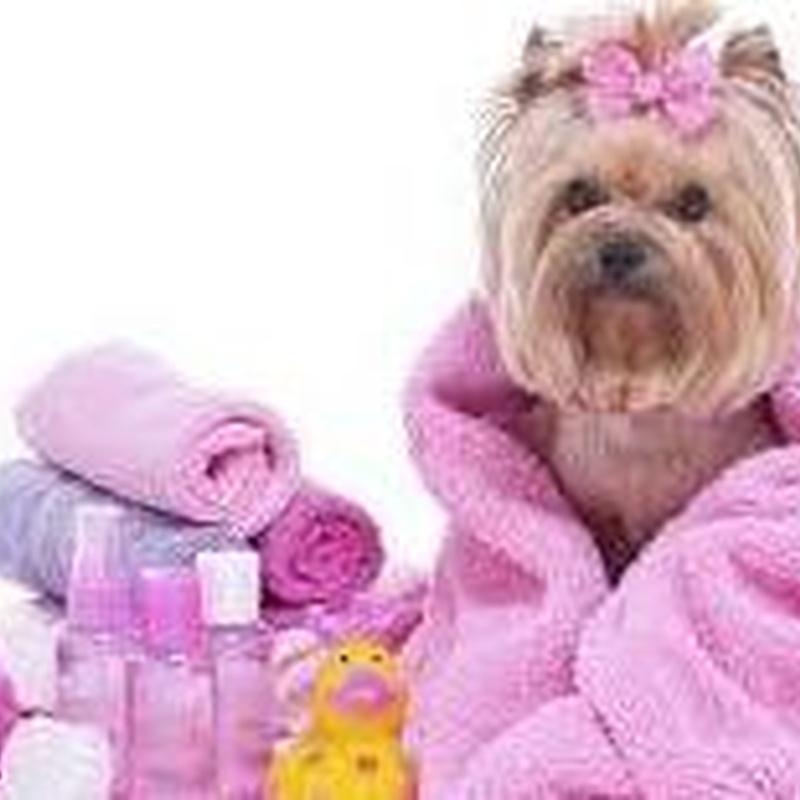 Ofertas y Promos: Servicios de Mascotas Dreams