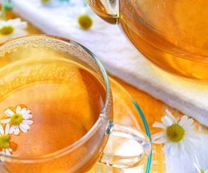 Fitoterapia y Homeopatía