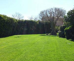 Mantenimiento de jardines en comunidades