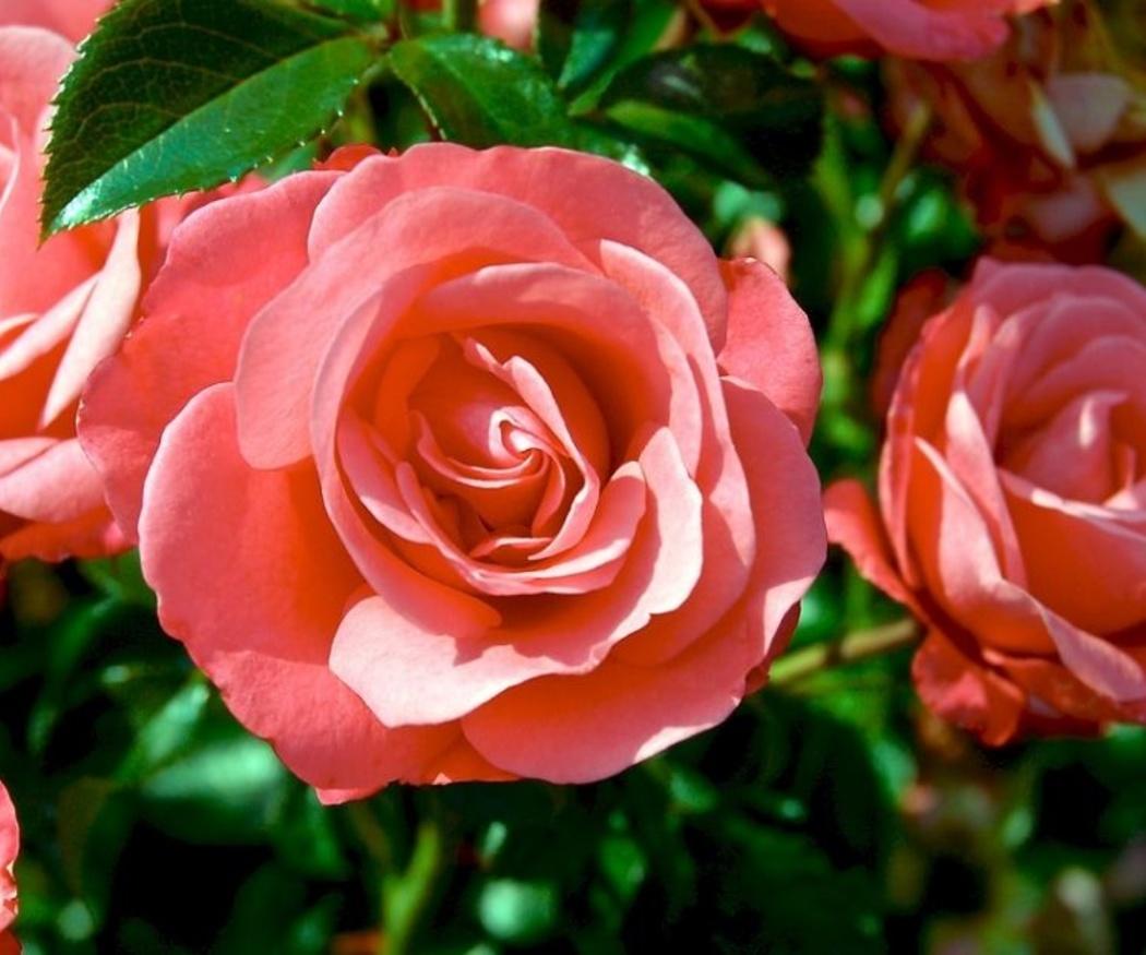 Las flores como regalo empresarial
