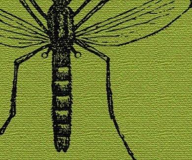 15 plantas para repeler mosquitos