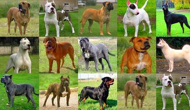 Certificados médicos perros peligrosos
