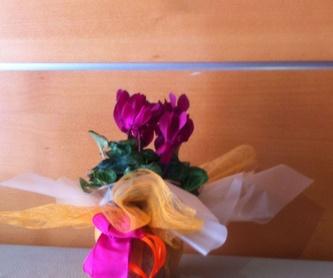 Funerarios: Servicios de Floristería Lola