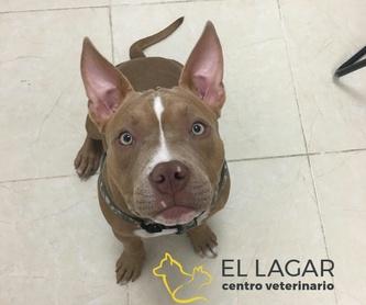 Especialidades clínicas: Tratamientos y especilidades de Centro veterinario El Lagar