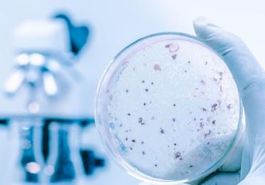 Bacteriostático
