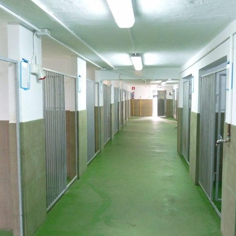 Higiene: Servicios de Errekagane Residencia Canina
