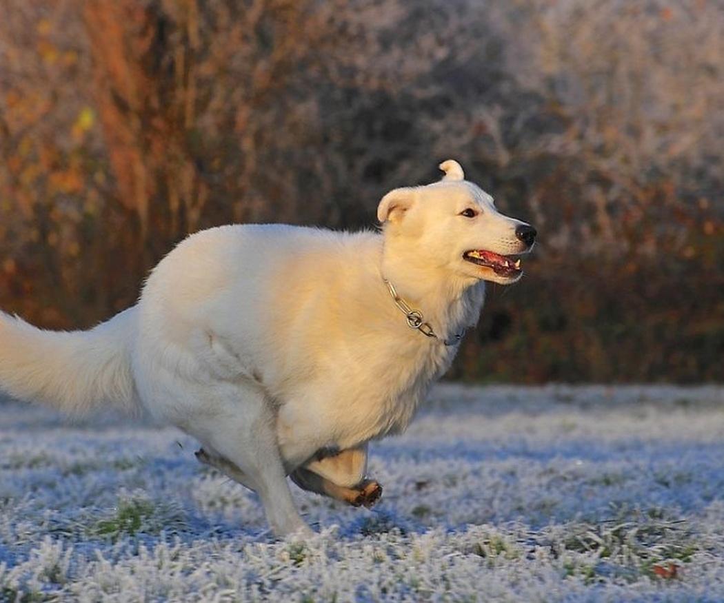 Cómo saber si un perro tiene sobrepeso
