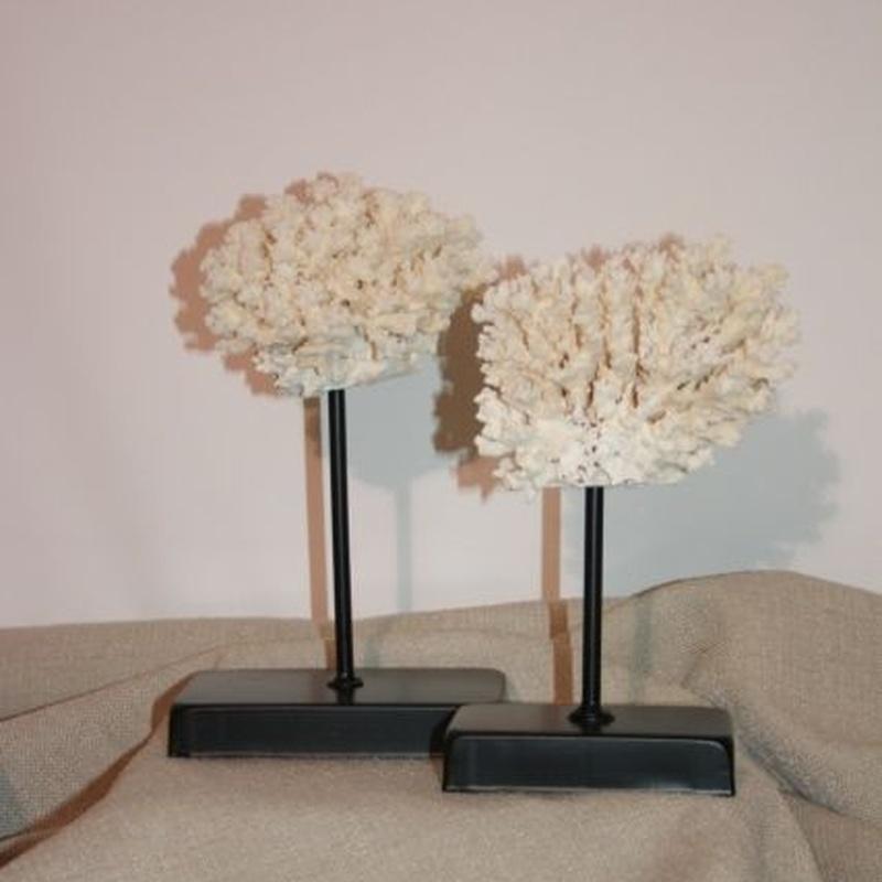 Decoración: Coral blanco grande: Catálogo de Ste Odile Decoración
