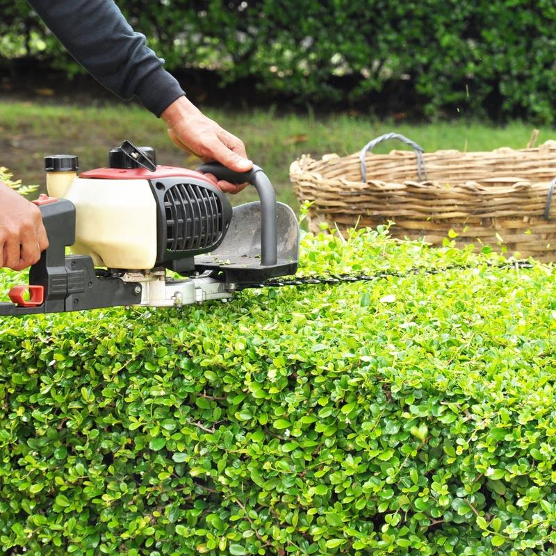 Jardinería: Tratamientos de Anfe Limpieza y Desinfección
