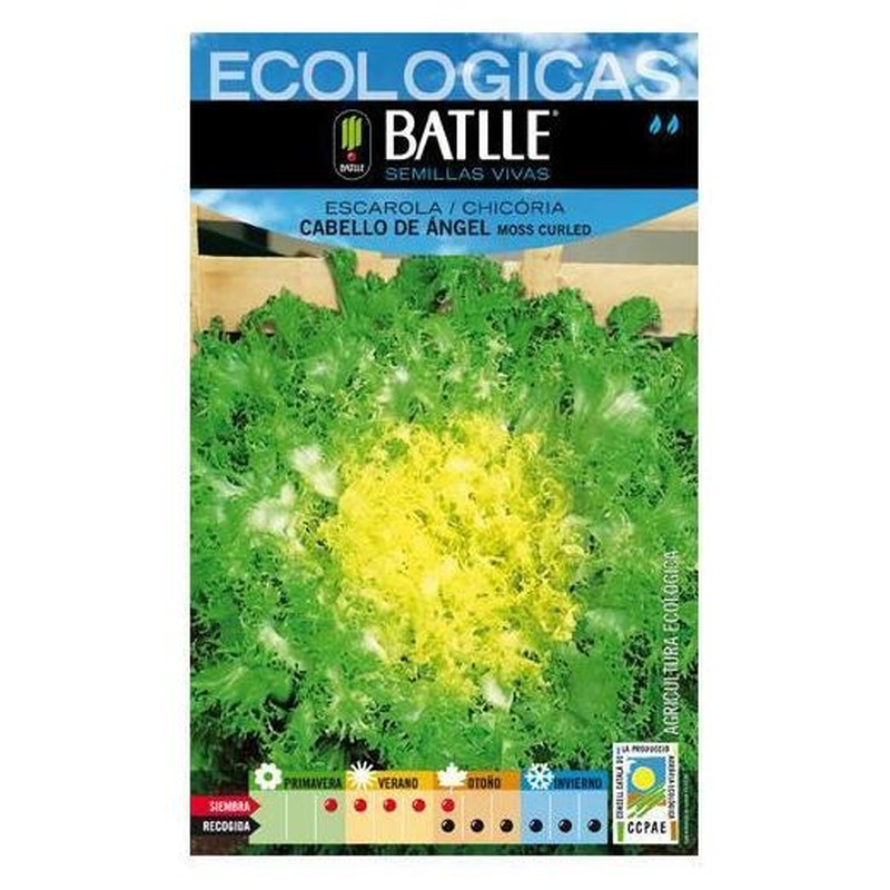 Semillas ecológicas de Escarola cabello de ángel-moss curled Ref 30